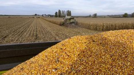 Marché des céréales : Les cours baissent en raison d'une offre US élevée Agriculture - Le Maghreb   Agriculture et Alimentation méditerranéenne durable   Scoop.it