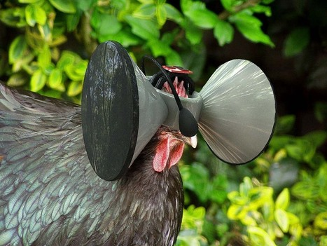 Virtual reality for chickens is the future of farming | 3D Virtual-Real Worlds: Ed Tech | Scoop.it