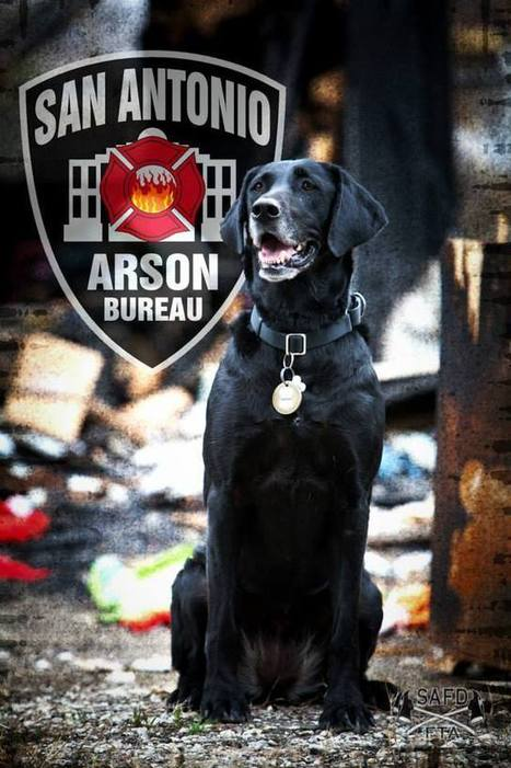 SAFD Arson dog headed to Hollywood - KSAT San Antonio | CLOVER ENTERPRISES ''THE ENTERTAINMENT OF CHOICE'' | Scoop.it