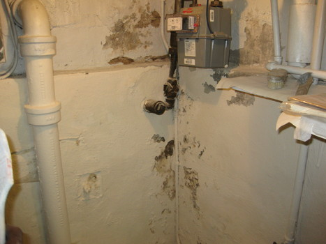 NYC mold removal | How to remove mold | NYC mold removal | Scoop.it