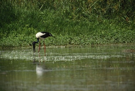 Recent Loss of Freshwater Wetlands Worldwide Valued at $2.7 Trillion per Year | Sustain Our Earth | Scoop.it