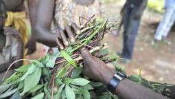 Une crise alimentaire majeure se profile en RCA | Action humanitaire dans le monde et ONG | Scoop.it