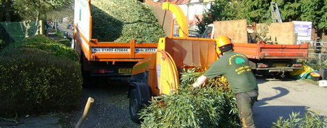 Tree Surgeons Harrow | AlexWilliam46 | Scoop.it