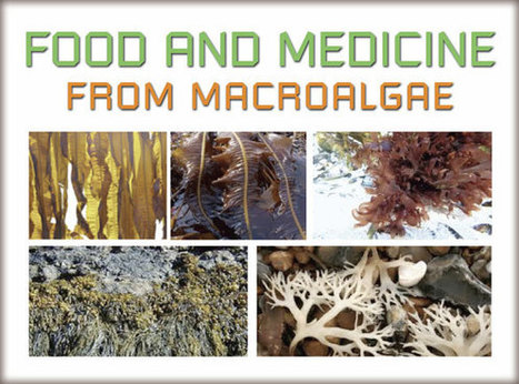 Algae Medical Solutions: Part 6 | Sustain Our Earth | Scoop.it