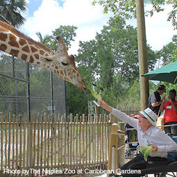 Visiting the Zoo with an Elder | CareGivers | Scoop.it