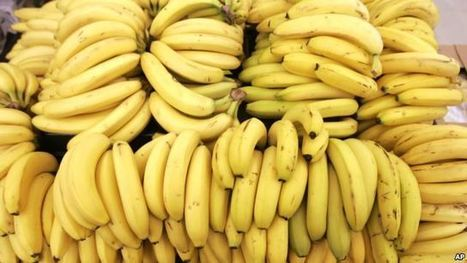 Disease Threatens World Banana Supplies | The EFL SMARTblog Scoop.it Page | Scoop.it