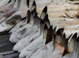 What Do You Really Know About Shark Finning? | All about water, the oceans, environmental issues | Scoop.it