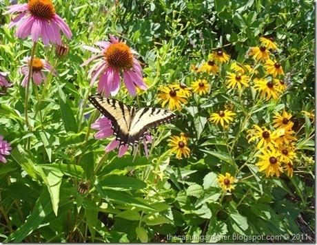 Tough Plants To Kill – My Favorite Top 10 Drought Tolerant Perennials   Annie Haven   Haven Brand   Scoop.it