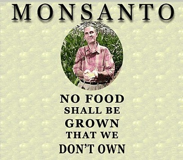 How Monsanto Outfoxed The Obama Administration - Owning The Seeds of Life Patents | YOUR FOOD, YOUR HEALTH: #Biotech #GMOs #Pesticides #Chemicals #FactoryFarms #CAFOs #BigFood | Scoop.it