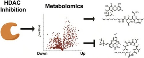 Large-Scale Metabolomics Reveals a Complex Response of Aspergillus nidulans to Epigenetic Perturbation | Discovery of Marine Natural Products | Scoop.it