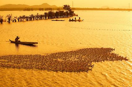 Mekong Delta Tours | Halong Bay Trip | Scoop.it