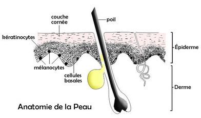 Cancer de la peau | svt cancer soleil mars 2013 | Scoop.it