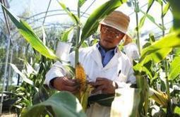 L'Égypte va ouvrir une bourse des matières premières agricoles | CIHEAM Press Review | Scoop.it