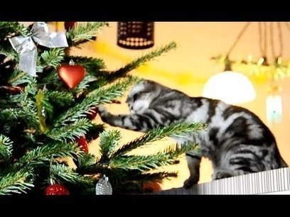 Funny Cats prepare for Christmas | Awesome | Scoop.it