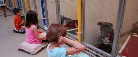 Kids Practice Reading to Shy Shelter Dogs at Humane Society | Soup for thought | Scoop.it