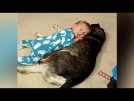 Loyal dog makes the perfect bed for a sleepy kid | ♨ Family & Food ♨ | Scoop.it