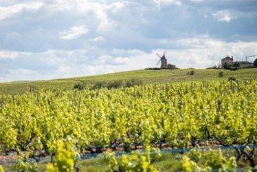 Les pesticides ont le vin mauvais | Toxique, soyons vigilant ! | Scoop.it