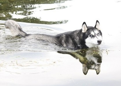 Exercising Safely with Your Dog | Minnesota Pet News | Scoop.it