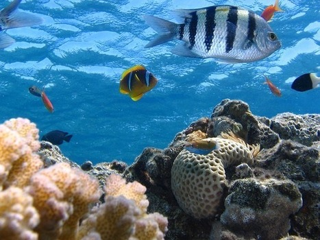 Ocean Acidification Rate 10 Times Faster than Ancient Upheaval - Nature World News | Marine Conservation and Ecology | Scoop.it
