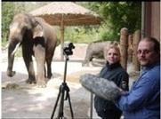 Koshik, l'éléphant d'Asie qui parle coréen - libération | La voix dans toutes ses dimensions | Scoop.it