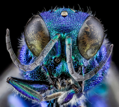 25 of the Best Close-Ups of Insect Eyes You Will See | Foto | Scoop.it
