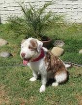 aubreyjdionisio's Journal Entry: Utilizing the correct dog training salt lake city goodies | Dog training utah | Scoop.it