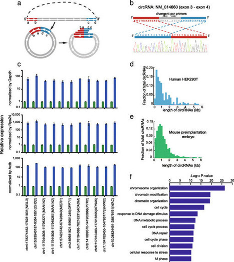 Single-cell RNA-seq transcriptome analysis of linear and circular RNAs | RNA-Seq Blog | Virology and Bioinformatics from Virology.ca | Scoop.it