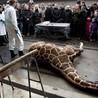 Animals in captivity - Zoo, circus, marine park, etc..