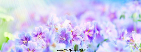 Facebook Cover Image - Flowers - TheQuotes.Net | Facebook Cover Photos | Scoop.it