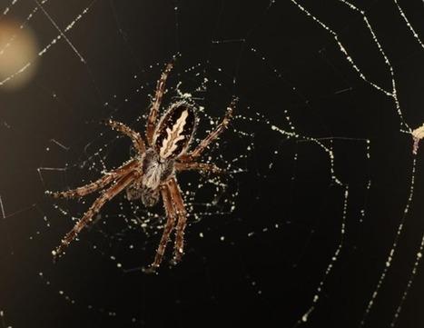 Finalement omnivores ? Des araignées complètent leur repas avec du pollen | EntomoNews | Scoop.it