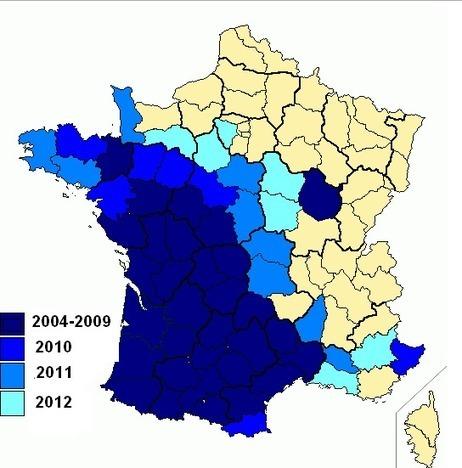 Frelons asiatiques : une seule femelle à l'origine de l'invasion en France ? | Agriculture en Dordogne | Scoop.it