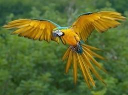 Παπαγάλοι Μακάο - Macaw | ΤΡΑΠΕΖΑ ΥΛΙΚΟΥ 2013-2014 | Scoop.it