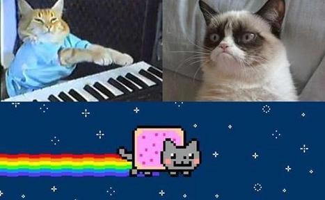 Profession: Agent de LOLcats | Les chats c'est pas que des connards | Scoop.it