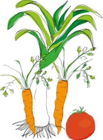 """Et si on cultivait des semences tombées dans le domaine public ou sous licence """"open source""""?   Solutions locales   Scoop.it"""
