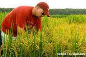 La FAO s'inquiète du bond des contaminations par des OGM | Questions de développement ... | Scoop.it