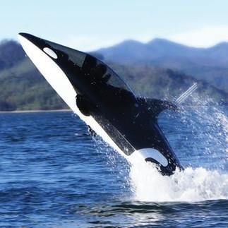 The Killer Whale Submarine - Hammacher Schlemmer   I Wanna Do this   Scoop.it