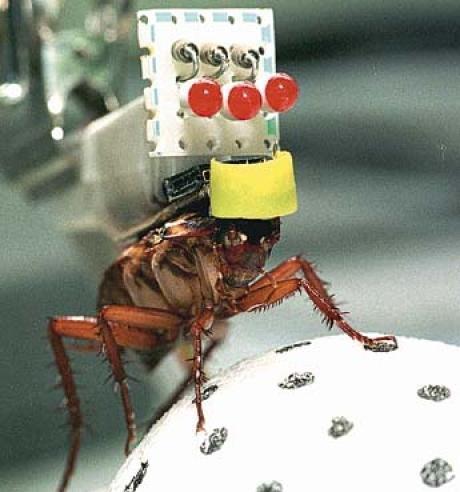 Le robot-blatte : universcience VOD - La plate-forme vidéo des sciences et des technologies | Le petit musée des cafards | Scoop.it
