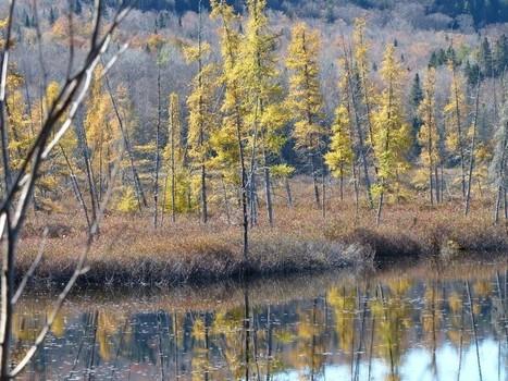 Réserve naturelle des Marais-du-Nord - Québec - Canada - Lac Saint-Charles - Association pour la protection de l'environnement du lac Saint-Charles et des Marais du Nord (APEL) | Faaxaal Forum Photos gratuite Faune et Flore | Scoop.it