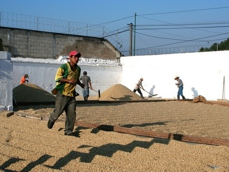 Help Finca El Valle Coffee Farm Recover from Roya on kickstarter | Coffee News | Scoop.it