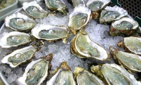 Les ostréiculteurs du bassin d'Arcachon encore victimes d'une surmortalité des huîtres | My global Bordeaux | Scoop.it
