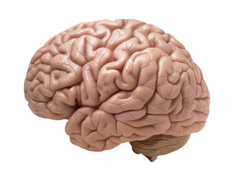 Une prothèse dans le cerveau pour doper la mémoire | Technologie & handicap | Scoop.it