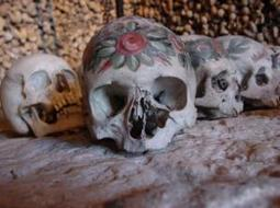 Human skull is highly integrated: Study sheds new light on evolutionary changes | Aux origines | Scoop.it