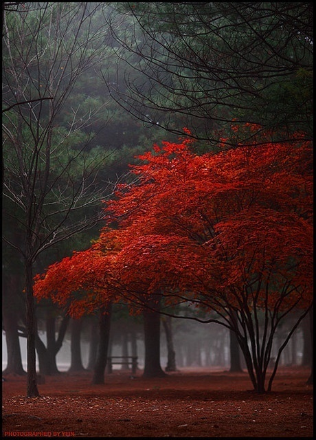 Red Fall....... | Planet Earth | Scoop.it