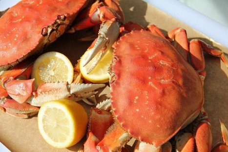 Oregon Dungeness Crab Season Has Arrived! | Family Travel | Scoop.it
