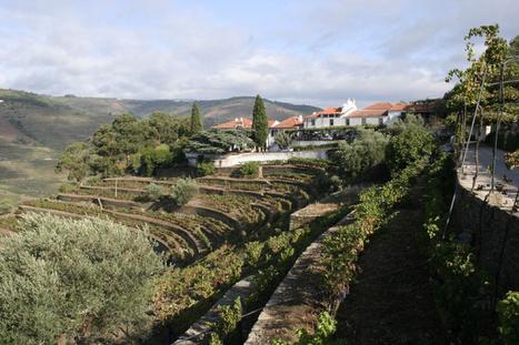 Quinta do Noval   The Douro Index   Scoop.it