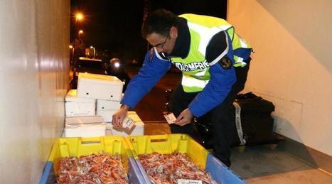 Lorient. Gendarmes et Affaires maritimes contrôlent le poisson | La Touline - | Scoop.it