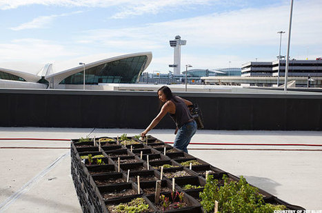 Organic Gardens, Bee Aviaries and Goat Grazing - The Latest In Sustainability Efforts at Airports | Eco-Friendly Lifestyle | Scoop.it