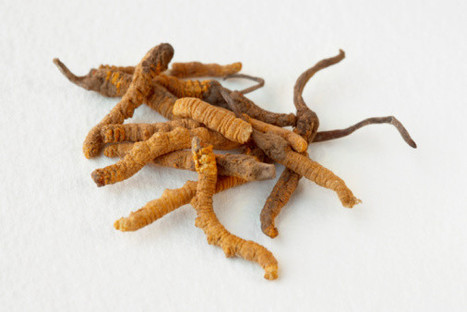 Cordyceps mushrooms may be potential drug when current drugs fail | alternative health | Scoop.it