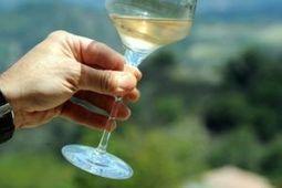 20 000 hectares de vignobles bio dans le Languedoc Roussillon Midi Pyrenees | Le Vin et + encore | Scoop.it
