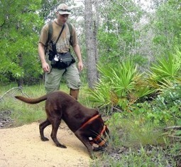 Wildlife Detector Dog Programs Sparks International Interest | Wildlife Trafficking: Who Does it? Allows it? | Scoop.it